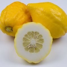 Etrog Citron citrus season :: Search by flavors, find similar varieties and discover new uses for ingredients @ preppings.com