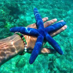 Estrella de mar shared by Yael Micheli on We Heart It Beautiful Creatures, Animals Beautiful, Beautiful Images, Vida Animal, Foto Fantasy, Wale, Underwater Life, Deep Blue Sea, Marine Biology
