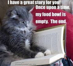 What are you waiting for? Feed him! #cats #cathumor