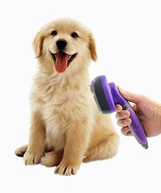 The brush is an important kit for Dog Grooming. This brush can be used to take care of dog coats. Since the coats of Lhasa Apso breed dog are too long so lose hair get trapped inside the deep hair. Then brushing is necessary to remove these hairs. Retriever Puppy, Dogs Golden Retriever, Golden Retrievers, Dog Clippers, Dog Cleaning, Best Brushes, Pet Dogs, Pets, Dog Shedding