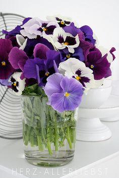 """Schon gewusst? Aus den Blüten des Stiefmütterchens braute Oberon in William Shakespeares """"Sommernachtstraum"""" einen Liebeszaubertrank."""