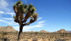 Mojave National Preserve Day Trip
