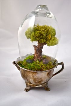 Tree terrarium beautiful real moss terrarium hand by UniqueLeeArt, $55.00