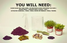 Step by step instructions for a terrarium..