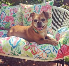 Adopt Mazzy Star On Dogs Pugs Adoption