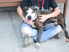 "BILL_A1085060. He faces every moment with wide eyes and a waggy tail as if to say ""What next!?"" Looks-wise, he is a little rough around the edges: he has a bump on his head (he is magical like a unicorn!), is a little skinny, and a little dirty; but those rough edges are completely overshadowed by that sweet, sweet face!! He seems to have housetraining, mostly walks nicely on leash, eagerly sits for treats, and has seemed interested and friendly towards dogs we've seen outside. He is always…"