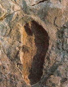 The 3.75 Million Years Old Laetoli Footprints