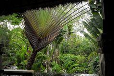 @Adele Bleakley Resort Spa (Koh Lanta) outdoor living - design realpalmtrees.com - #FallGifts #palmtreelandscape #cool #palms #palmTrees  #fallwinterIdeas #plants buy palm trees #DIYIdeas #TropicalYardIdeas #texas #realpalmtrees #california #florida