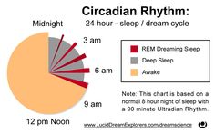 Circadian Rhythm pie chart with ultradian rhythms included for typical sleep time. Site explains ebb & flow of typical sleep cycles. Pie Chart Graph, Complicated Migraine, Biology Projects, Rem Sleep, Sleep Dream, Health Heal, Central Nervous System, Spiritual Awareness, Mind Body Spirit