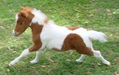 miniature horses for sale - page 205 Miniature Horses For Sale, Mini Pony, Miniatures, Photo And Video, Beautiful Horses, Ponies, Animals, Color, Pretty Horses
