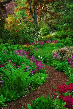 Side yard... Winding path lined with textured greens
