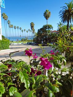 La Jolla California...can't wait to see in person...