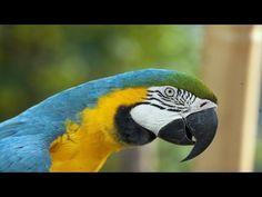 Macaw Documentary