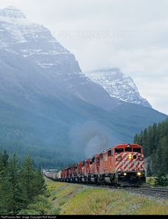 Net Photo: CP 9011 Canadian Pacific Railway EMD at Field, British Columbia, Canada by Rolf Stumpf Canadian Pacific Railway, Canadian Rockies, By Train, Train Tracks, Buses And Trains, Bonde, Train Times, Continental Divide, Rail Car
