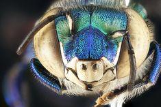 Macro Photos of Bees Showcase Stunning Natural Detail - My Modern Metropolis