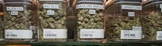 What a Looming Patent War Could Mean for the Future of the Marijuana Industry