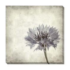 Floral I Oversized Gallery Wrapped Canvas | Overstock.com Shopping - The Best Deals on Canvas