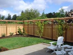 the grapes and the raspberries can share the same growing space.Perhaps the grapes and the raspberries can share the same growing space. Privacy Fence Landscaping, Garden Privacy, Outdoor Privacy, Backyard Privacy, Garden Shrubs, Backyard Fences, Lawn And Garden, Backyard Landscaping, Trellis Fence