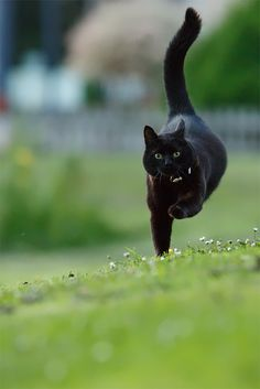 Black cat  I Believe I can Fly