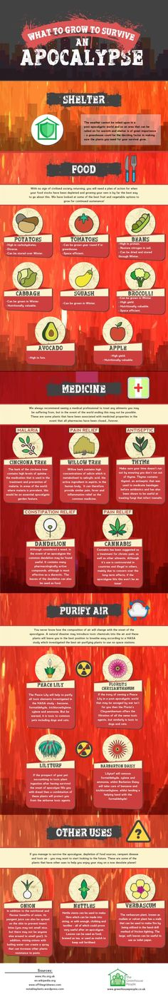 What to grow to survive an apocalypse [infographic] Survival Prep Shop Survival Life, Homestead Survival, Survival Food, Wilderness Survival, Camping Survival, Outdoor Survival, Survival Prepping, Emergency Preparedness, Survival Skills