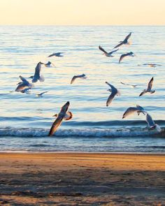Gulls at dusk. Photo by Emsie Williams, Goderich, ON.