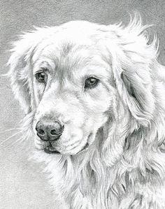 Golden Retriever Art, Golden Retrievers, Transformers Coloring Pages, Puppy Coloring Pages, Retriever Puppy, Animal Sketches, Wildlife Art, Dog Art, Pet Portraits
