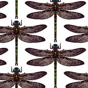 Dragonfly White By Scrummy Spoonflower Digitally Printed Fabric Wallpaper And Gift Wrap