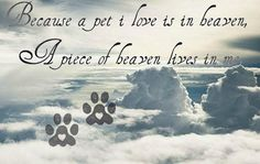 Because a pet I love is in heaven, a piece of heaven lives in me.