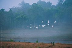 Birds flying by Chalit Saphaphak for Stocksy United