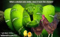 Chicken vs. Snake [10w] When a chicken eats snake does it taste like chicken?  ~ Beryl Dov