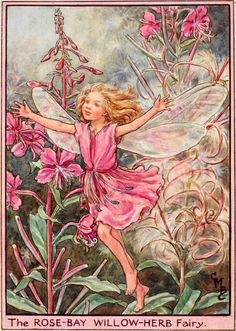 The Rose-Bay Willow-Herb Fairy by Cicely Mary Barker