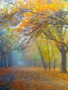 Road on a misty autumn day (Nowa Huta, Kraków, Poland) by Lidia