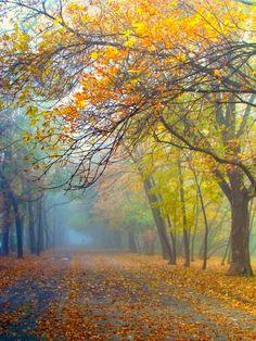 Road on a misty autumn day (Nowa Huta, Kraków, Poland) by Lidia