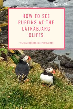 Where to See Puffins in Iceland Travel Guides, Iceland, Aurora, Explore, Ice Land, Northern Lights, Exploring