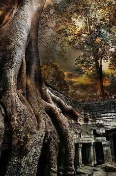 Angkor Wat Tree, Angkor Wat, Cambodia | by D'Arcy Guerin Gue on Flickr