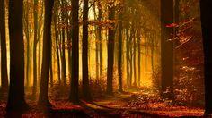 fall - Full HD Background 1920x1080