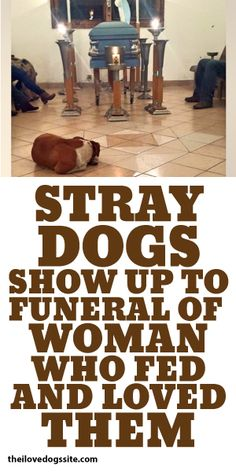 Stray Dogs Show Up To Funeral Of Woman Who Fed And Loved Them <3