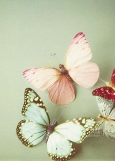 """The butterfly is a flying flower, the flower a tethered butterfly."" ~Ponce Denis Le Brun"