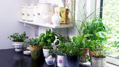 5 Delicious Indoor Herbs for Your Windowsill via @domainehome