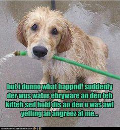 puppy dog eyes... sooo, funny!!