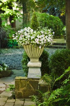 Oh I do love white petunias in an urn.