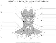 unlabed skull inferior view | Anatomy Practice Worksheets ...