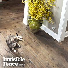 No More Dog Gates Avoidance Areas Indoor Fence The Invisible Brand