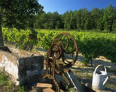 South France: Villa des Rosiers - The Wine