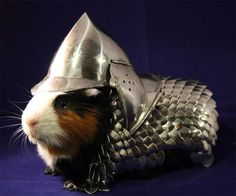 Handmade Guinea Pig Armor -- now I need a guinea pig. I wonder if they make for small dogs?