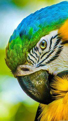 "Mug shot for Craig Buckner and his macaw, ""Bird. – A macaw named ""Bird"" is an instant Tropical Animals, Tropical Birds, Exotic Birds, Colorful Birds, Colorful Animals, Exotic Pets, Cute Birds, Pretty Birds, Beautiful Birds"