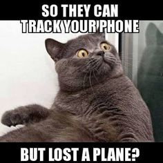 .Let us not be fooled. NASA knows exactly where that plane is; not that we'll ever be clued in. Funny Animal Memes, Funny Jokes, Funny Animals, Adult Humor, Crazy Cats, I Love Cats, Have Fun, Bow Wow, Twisted Humor