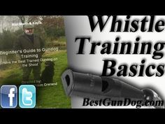 ▶ Hunting Dog Training (Whistle Training Basics) - YouTube