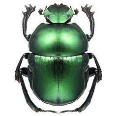 Beautiful Bright Metalic Green Beetle Vinyl by WilsonGraphics. , via Etsy. HSN.com #evanora #DisneyOz
