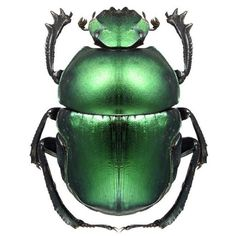 Beautiful Bright Metalic Green Beetle Vinyl by WilsonGraphics. , via Etsy. HSN.com #evanora #DisneyOz